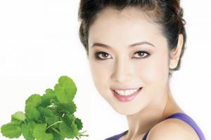 Nguyên liệu mỹ phẩm Chiết xuất rau má